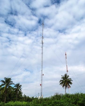 telephone poles: Telephone poles