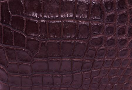 currying: brown skin crocodile  textured leather