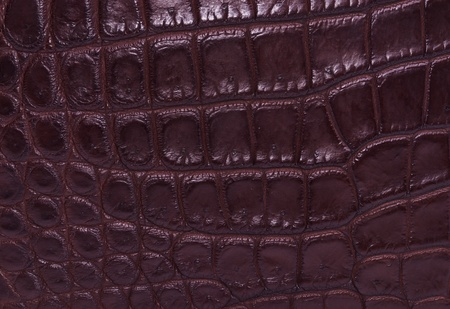 currying: skin crocodile brown textured leather