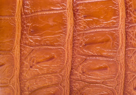 currying: skin crocodile textured leather brown Stock Photo