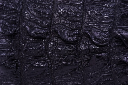 currying: skin crocodile textured black leather Stock Photo