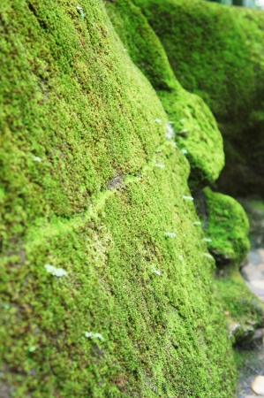 commune: Close-up Moss on rock        Stock Photo