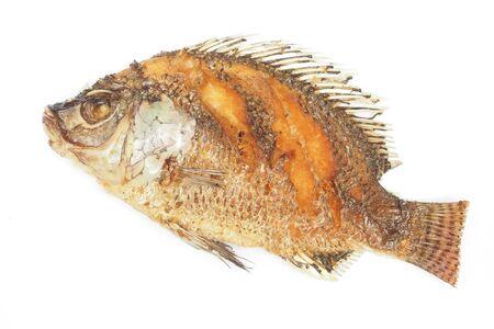 nilotica: crisp fried Tilapia fish on white background
