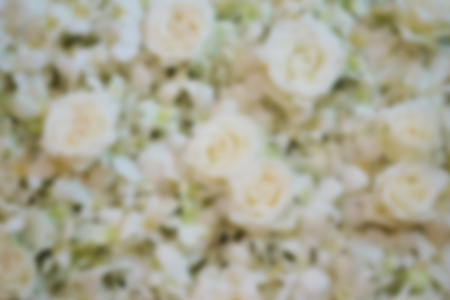 de focus: blurred white roses useful for background Stock Photo