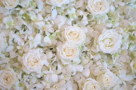 Witte rozen nuttig voor achtergrond