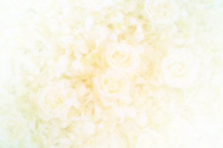 blurred  roses in soft color  for background photo