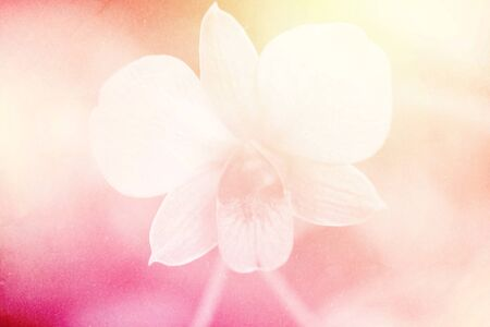 old pc: soft focus of orchid flower on sweet color with grunge paper texture