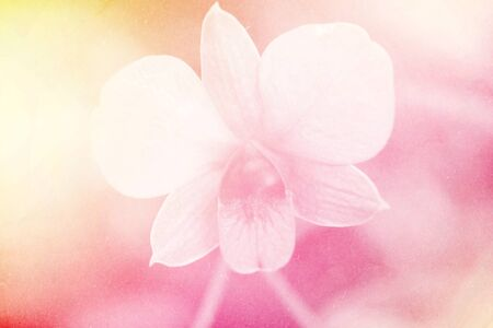 light pink: soft focus of orchid flower on sweet color with grunge paper texture