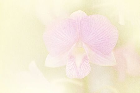 papel filtro: blurred artistic orchid with color filter, grunge paper texture Foto de archivo