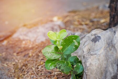 difficult lives: plant growing under a rock , difficult life and new born concept