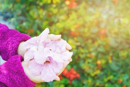 Little girls hands with pink trumpet flowers and blurred background little girls hands with pink trumpet flowers and blurred background stock photo 102187975 mightylinksfo