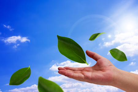 conservative: Ecology concept, save energy, hand and green leaf on blue sky background