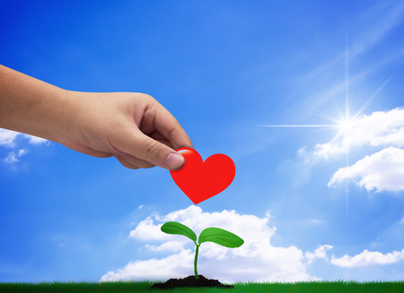 Donation concept, hand holding red heart on blue sky background, growing young plant Foto de archivo