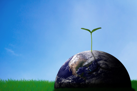Ecology concept, the earth and young plant on green grass background