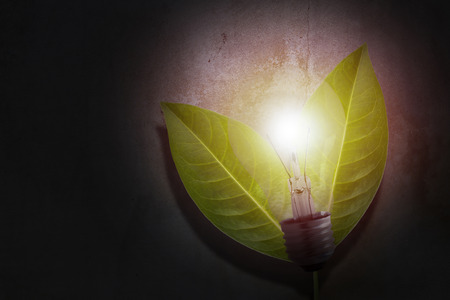 Ecology concept, save energy, tree leaf and light bulb on concrete background
