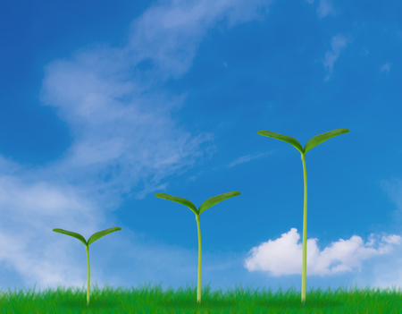 Business growth concept, young plant on blue sky background, financial increase market profit, nature and ecology