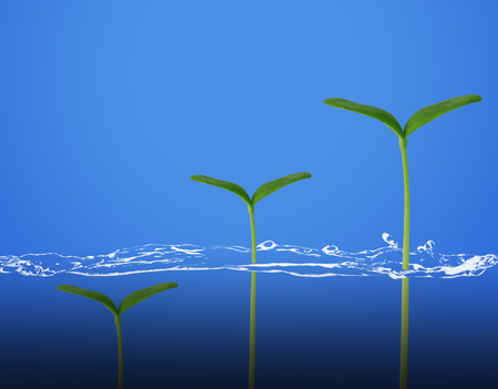 Business growth concept, young plant and water on blue background, financial increase market profit, nature and ecology