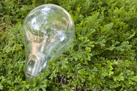 royalty free stock photos: light bulb on green grass