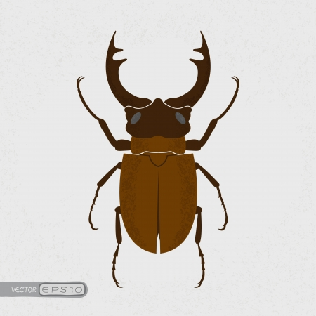 largest: Stag beetle, the largest beetle , eps10 vector format