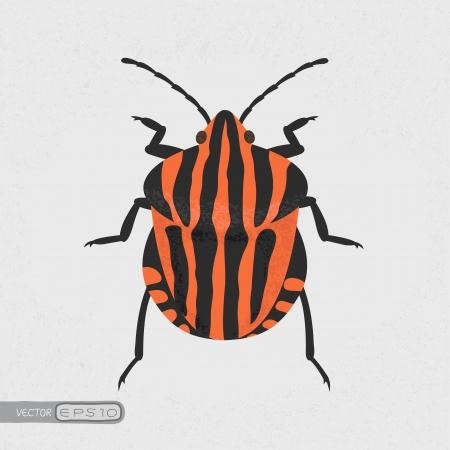 shield bug , eps10 vector format Illustration