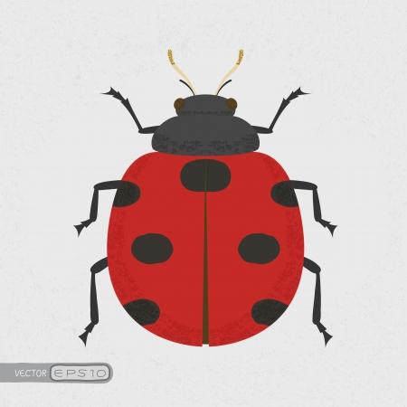 lady bug: Lady Bug, eps10 Vektor-Format