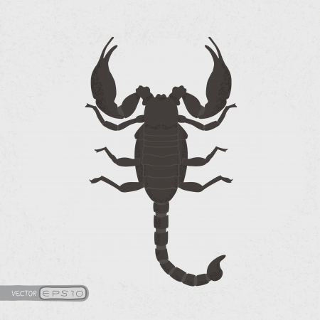 scorpion , eps10 vector format Stock Vector - 19717996