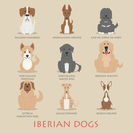 dogs: Set of Iberian dogs  Illustration