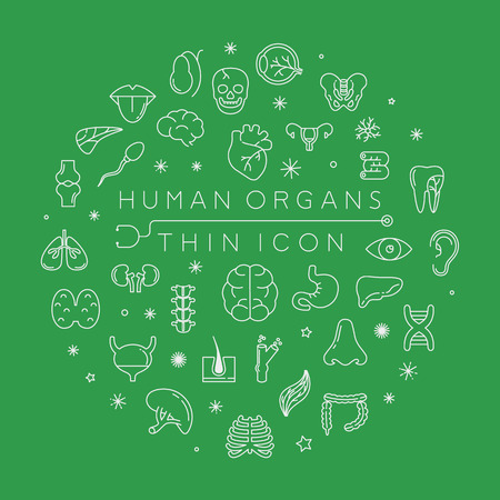 muscle bone: Human organs thin icons ,  vector format