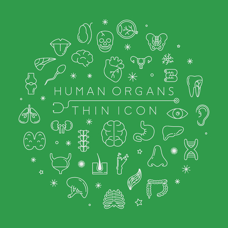 cranial skeleton: Human organs thin icons , eps10 vector format Illustration