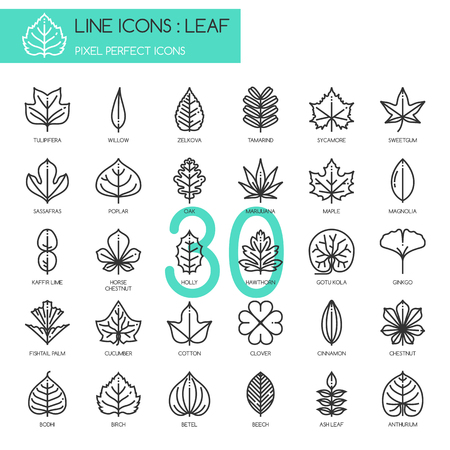 pixel perfect: Leaf , thin line icons set ,pixel perfect icon Illustration