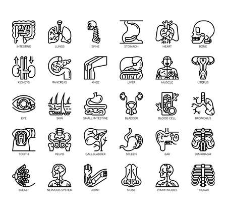 Set of human organ thin line and pixel perfect icons for any web and app project. 向量圖像