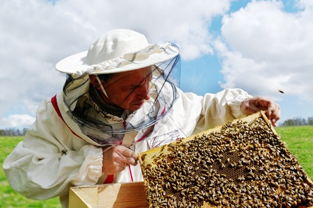 Apiarist and frame with bees, horizontal photo.