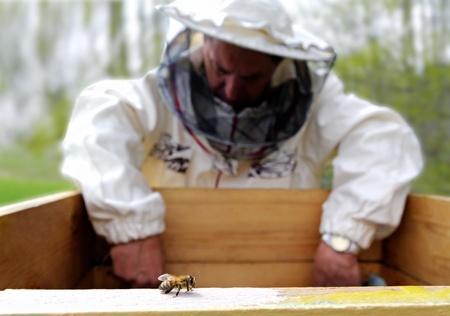 Bee rester sur le premier foyer, sur un second plan est un apiculteur. Banque d'images - 9612494