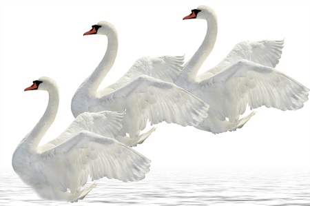 Flying swans on the white surface. photo