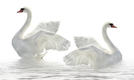 Twee zwanen op het witte oppervlak.
