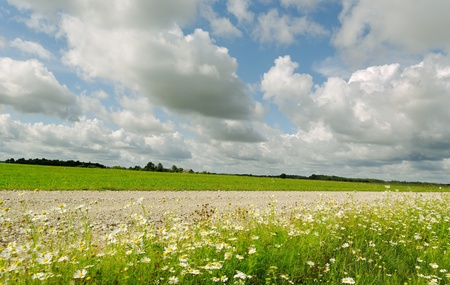 Country road between wild daisies and meadow.