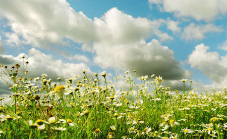Summer daisies in a sunny day. Stock Photo - 10824257