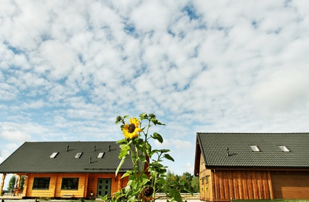 Two country houses and big sunflower.  photo