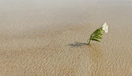 Alone flower survival on water in a wind.