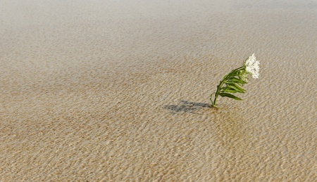 endurance: Alone flower survival on water in a wind.