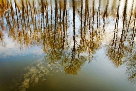 Trees reflection in lake water. Stock Photo - 11933787