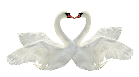 Two swans on white surface. Stock Photo - 12032677