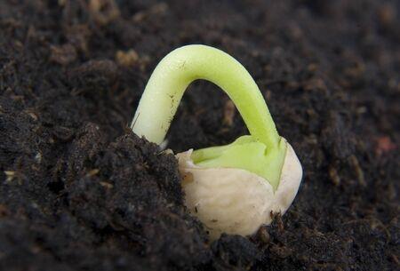 Plante en croissance. Banque d'images - 12032678