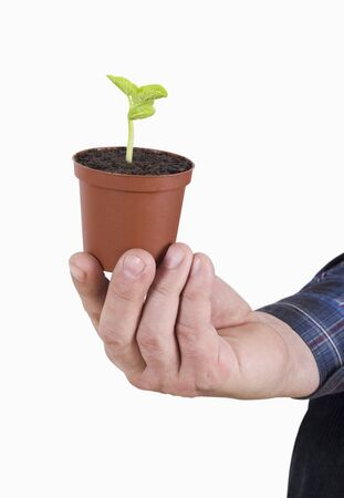 Growing plant in a man hand. photo