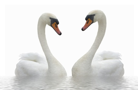Two swans. Banque d'images