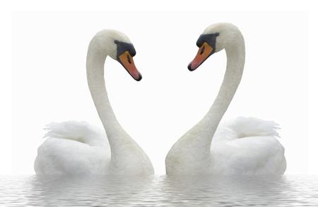 Two swans. Standard-Bild