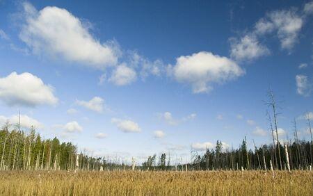 drow: Landscape. Stock Photo