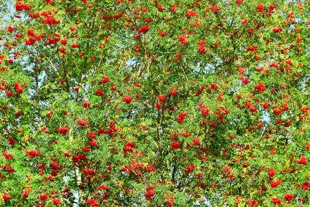 fascicule: Big roman tree in a garden  Stock Photo