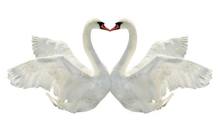 Two swans is kissing on white surface  photo
