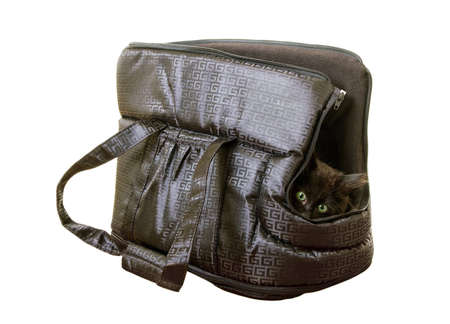 Black kitten into a special animal bag  photo